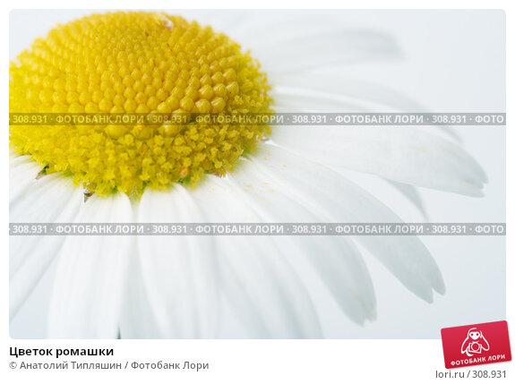 Цветок ромашки, фото № 308931, снято 9 июля 2007 г. (c) Анатолий Типляшин / Фотобанк Лори