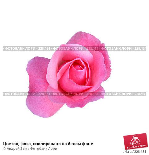 Цветок,  роза, изолировано на белом фоне, фото № 228131, снято 8 июля 2006 г. (c) Андрей Зык / Фотобанк Лори