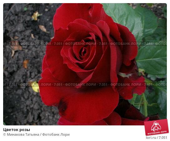 Цветок розы, фото № 7051, снято 25 июня 2006 г. (c) Минакова Татьяна / Фотобанк Лори
