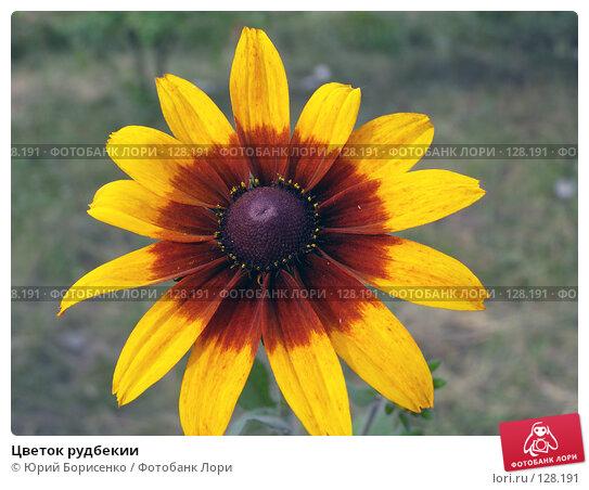 Цветок рудбекии, фото № 128191, снято 17 июня 2007 г. (c) Юрий Борисенко / Фотобанк Лори