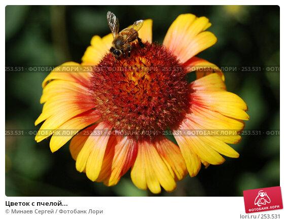Цветок с пчелой..., фото № 253531, снято 11 июня 2007 г. (c) Минаев Сергей / Фотобанк Лори