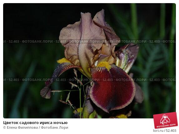 Купить «Цветок садового ириса ночью», фото № 52403, снято 10 июня 2007 г. (c) Елена Филиппова / Фотобанк Лори