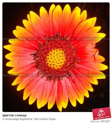 Цветок солнца, фото № 187607, снято 9 июля 2007 г. (c) Александр Бербасов / Фотобанк Лори