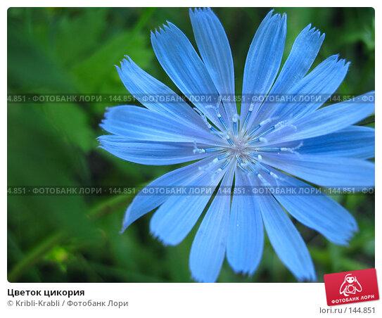 Цветок цикория, фото № 144851, снято 25 июля 2007 г. (c) Kribli-Krabli / Фотобанк Лори