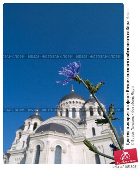 Цветок цикория на фоне Вознесенского войскового собора Новочеркасска, фото № 105803, снято 28 июля 2006 г. (c) Борис Панасюк / Фотобанк Лори