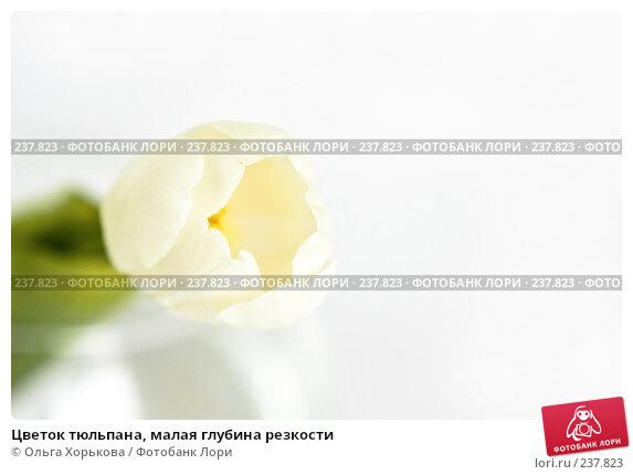 Цветок тюльпана, малая глубина резкости, фото № 237823, снято 8 марта 2008 г. (c) Ольга Хорькова / Фотобанк Лори