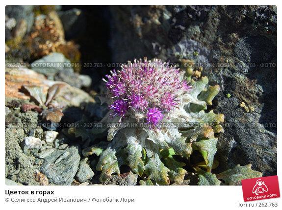Цветок в горах, фото № 262763, снято 27 августа 2007 г. (c) Селигеев Андрей Иванович / Фотобанк Лори