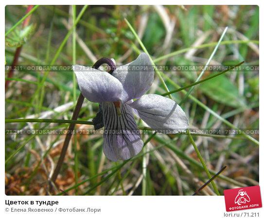 Цветок в тундре, фото № 71211, снято 12 ноября 2006 г. (c) Елена Яковенко / Фотобанк Лори