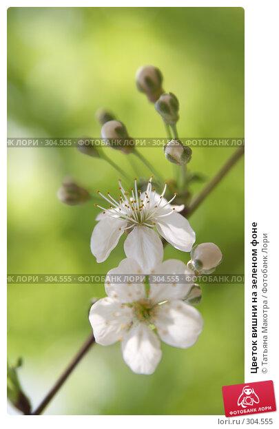 Цветок вишни на зеленом фоне, фото № 304555, снято 29 апреля 2008 г. (c) Татьяна Макотра / Фотобанк Лори