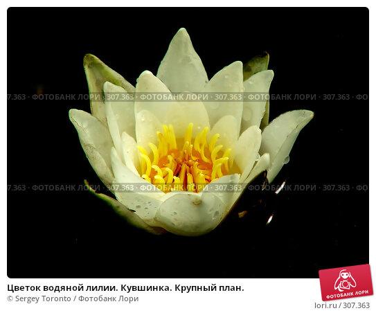 Цветок водяной лилии. Кувшинка. Крупный план., фото № 307363, снято 28 июля 2004 г. (c) Sergey Toronto / Фотобанк Лори