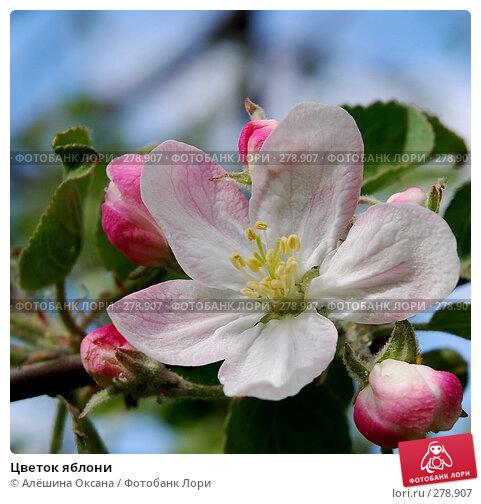 Цветок яблони, эксклюзивное фото № 278907, снято 7 мая 2008 г. (c) Алёшина Оксана / Фотобанк Лори