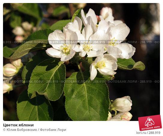 Цветок яблони, фото № 288919, снято 17 мая 2008 г. (c) Юлия Бобровских / Фотобанк Лори