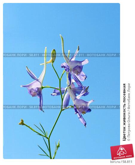 Цветок живокость посевная, фото № 58811, снято 1 июля 2007 г. (c) Петрова Ольга / Фотобанк Лори