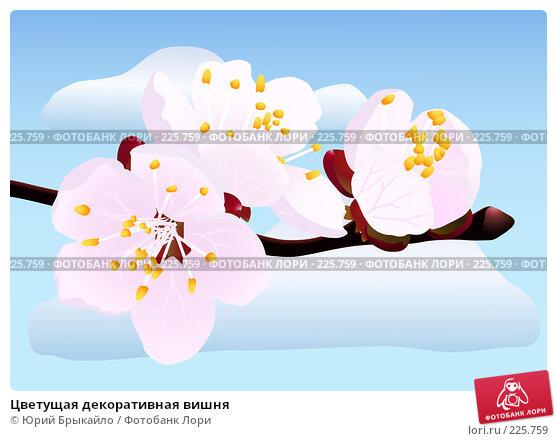 Купить «Цветущая декоративная вишня», иллюстрация № 225759 (c) Юрий Брыкайло / Фотобанк Лори