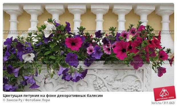 Цветущая петуния на фоне декоративных балясин, фото № 311663, снято 1 июня 2008 г. (c) Заноза-Ру / Фотобанк Лори