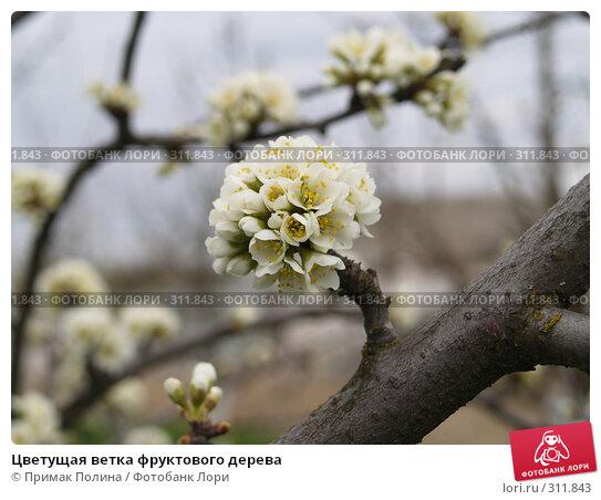 Цветущая ветка фруктового дерева, фото № 311843, снято 25 апреля 2007 г. (c) Примак Полина / Фотобанк Лори