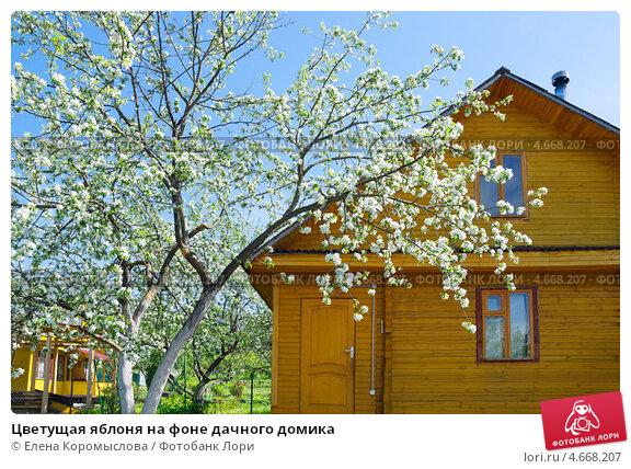 Купить «Цветущая яблоня на фоне дачного домика», эксклюзивное фото № 4668207, снято 19 мая 2013 г. (c) Елена Коромыслова / Фотобанк Лори
