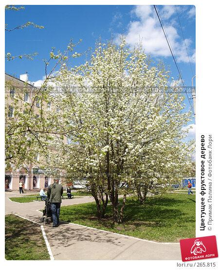 Цветущее фруктовое дерево, фото № 265815, снято 26 апреля 2008 г. (c) Примак Полина / Фотобанк Лори