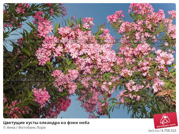 южные кустарники цветущие фото алюминиевый компании Донской
