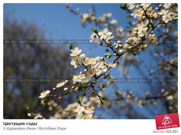 Цветущие сады, фото № 305091, снято 26 апреля 2008 г. (c) Куракевич Иван / Фотобанк Лори