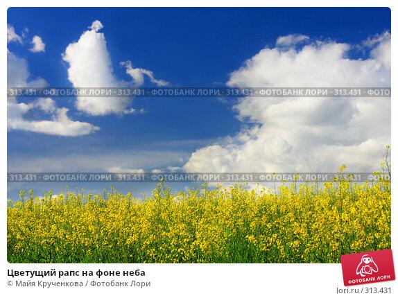 Цветущий рапс на фоне неба, фото № 313431, снято 31 мая 2008 г. (c) Майя Крученкова / Фотобанк Лори