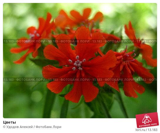 Цветы, фото № 13183, снято 3 июля 2005 г. (c) Удодов Алексей / Фотобанк Лори