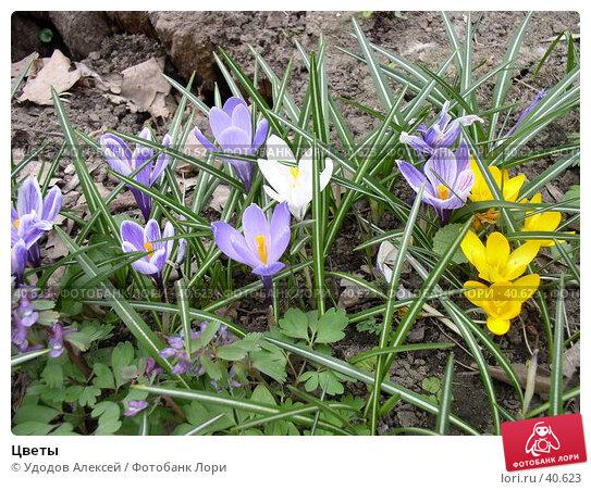 Цветы, фото № 40623, снято 18 апреля 2007 г. (c) Удодов Алексей / Фотобанк Лори