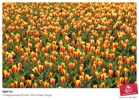 Цветы, фото № 41247, снято 1 мая 2007 г. (c) Биржанова Юлия / Фотобанк Лори