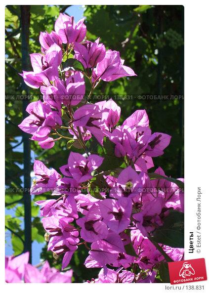 Цветы, фото № 138831, снято 5 июля 2007 г. (c) Estet / Фотобанк Лори