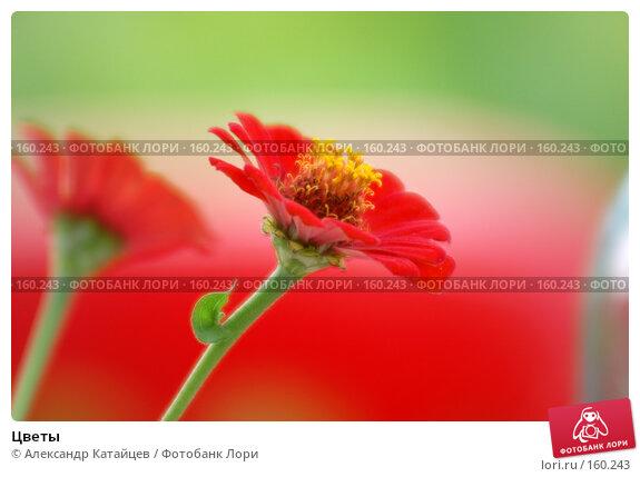 Купить «Цветы», фото № 160243, снято 29 июля 2007 г. (c) Александр Катайцев / Фотобанк Лори