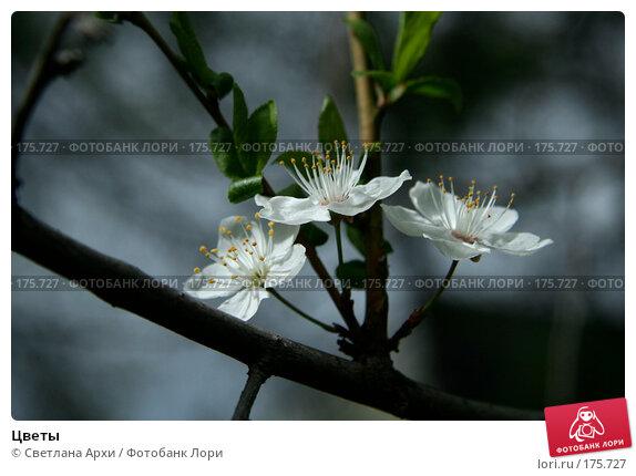Цветы, фото № 175727, снято 29 апреля 2007 г. (c) Светлана Архи / Фотобанк Лори