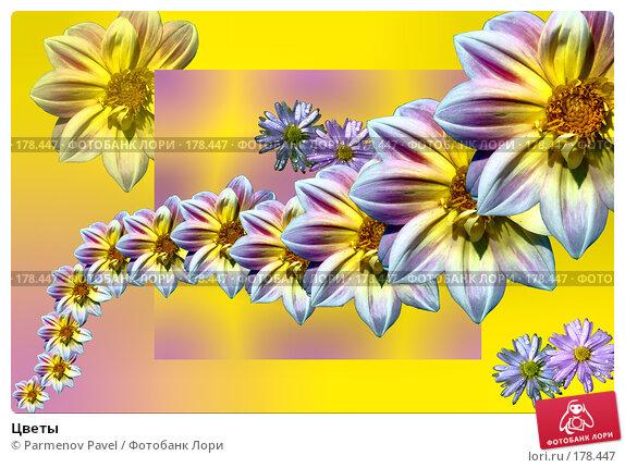 Цветы, фото № 178447, снято 21 декабря 2007 г. (c) Parmenov Pavel / Фотобанк Лори