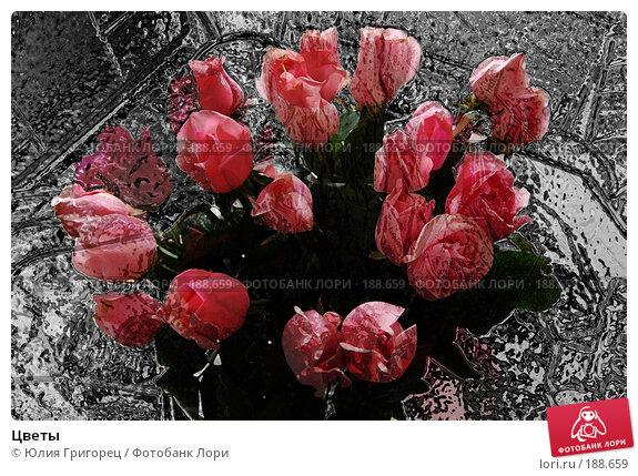 Цветы, фото № 188659, снято 11 ноября 2006 г. (c) Юлия Севастьянова / Фотобанк Лори