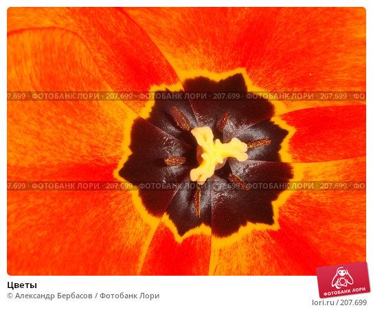 Цветы, фото № 207699, снято 14 мая 2007 г. (c) Александр Бербасов / Фотобанк Лори