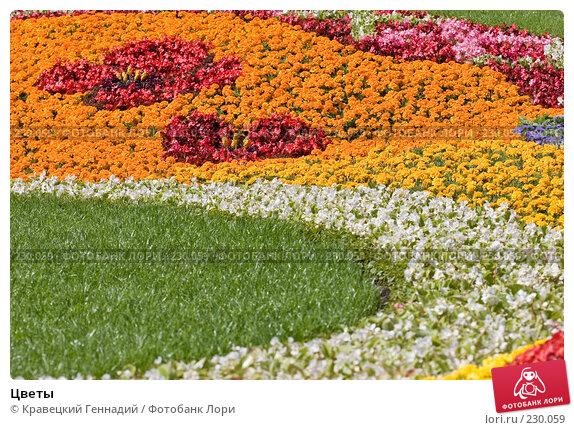Цветы, фото № 230059, снято 28 августа 2005 г. (c) Кравецкий Геннадий / Фотобанк Лори