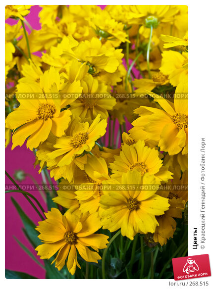 Цветы, фото № 268515, снято 1 августа 2004 г. (c) Кравецкий Геннадий / Фотобанк Лори
