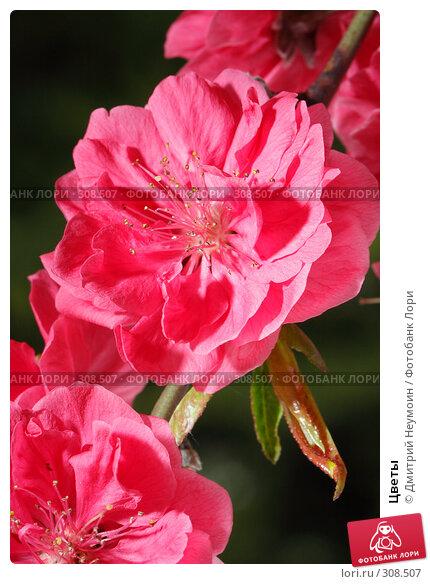 Цветы, эксклюзивное фото № 308507, снято 22 апреля 2008 г. (c) Дмитрий Неумоин / Фотобанк Лори