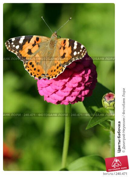Цветы бабочка, эксклюзивное фото № 240471, снято 7 сентября 2004 г. (c) Дмитрий Неумоин / Фотобанк Лори
