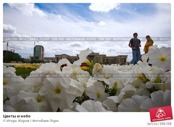 Цветы и небо, фото № 339159, снято 10 августа 2007 г. (c) Игорь Жоров / Фотобанк Лори