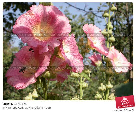 Купить «Цветы и пчелы», фото № 123459, снято 13 августа 2007 г. (c) Колчева Ольга / Фотобанк Лори