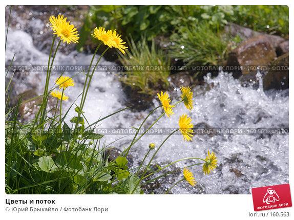 Цветы и поток, фото № 160563, снято 29 июня 2007 г. (c) Юрий Брыкайло / Фотобанк Лори