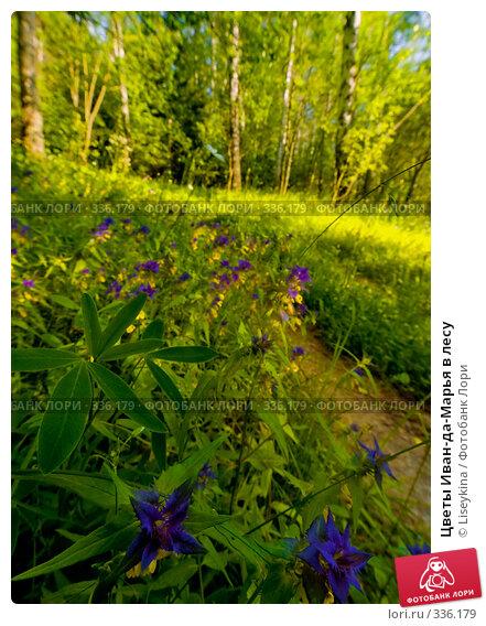 Цветы Иван-да-Марья в лесу, фото № 336179, снято 21 июня 2008 г. (c) Liseykina / Фотобанк Лори