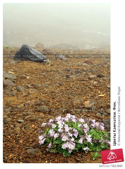 Цветы Камчатки. Фон., фото № 162843, снято 27 июня 2007 г. (c) Николай Коржов / Фотобанк Лори