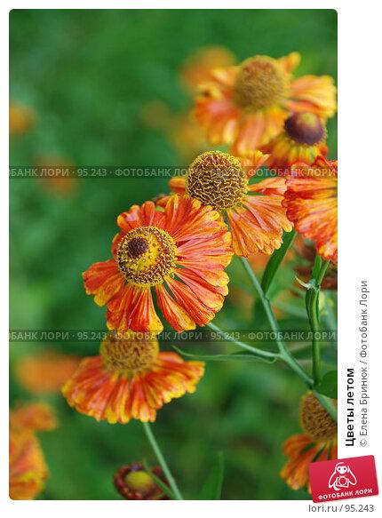 Цветы летом, фото № 95243, снято 1 сентября 2007 г. (c) Елена Бринюк / Фотобанк Лори