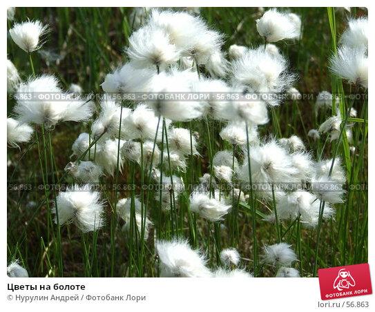 Купить «Цветы на болоте», фото № 56863, снято 30 июня 2007 г. (c) Нурулин Андрей / Фотобанк Лори
