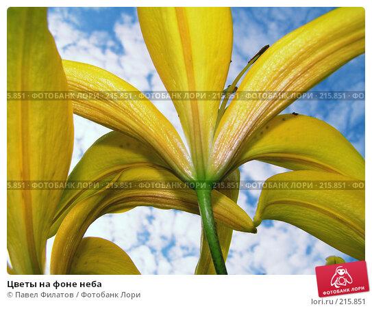 Купить «Цветы на фоне неба», фото № 215851, снято 15 июля 2007 г. (c) Павел Филатов / Фотобанк Лори