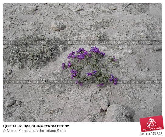 Цветы на вулканическом пепле, фото № 53323, снято 10 июня 2007 г. (c) Maxim Kamchatka / Фотобанк Лори