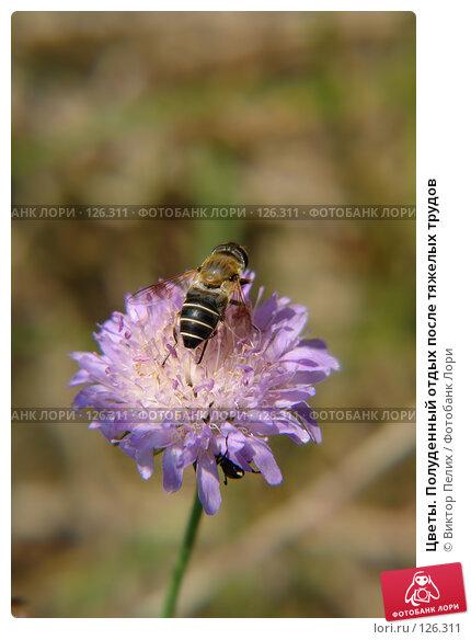 Купить «Цветы. Полуденный отдых после тяжелых трудов», фото № 126311, снято 16 июня 2007 г. (c) Виктор Пелих / Фотобанк Лори