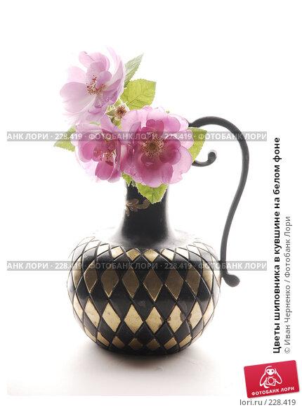 Купить «Цветы шиповника в кувшине на белом фоне», фото № 228419, снято 30 мая 2007 г. (c) Иван Черненко / Фотобанк Лори