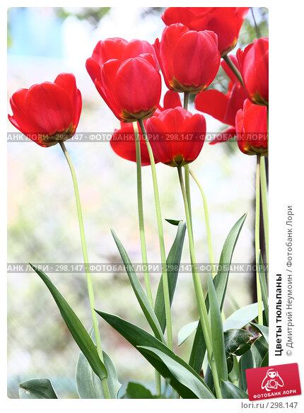Купить «Цветы тюльпаны», эксклюзивное фото № 298147, снято 21 апреля 2008 г. (c) Дмитрий Нейман / Фотобанк Лори